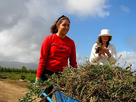 Junior Jessica O'Gorman (center) working in the fields as part of Mission and Ministry's Salinas Immersion experience.